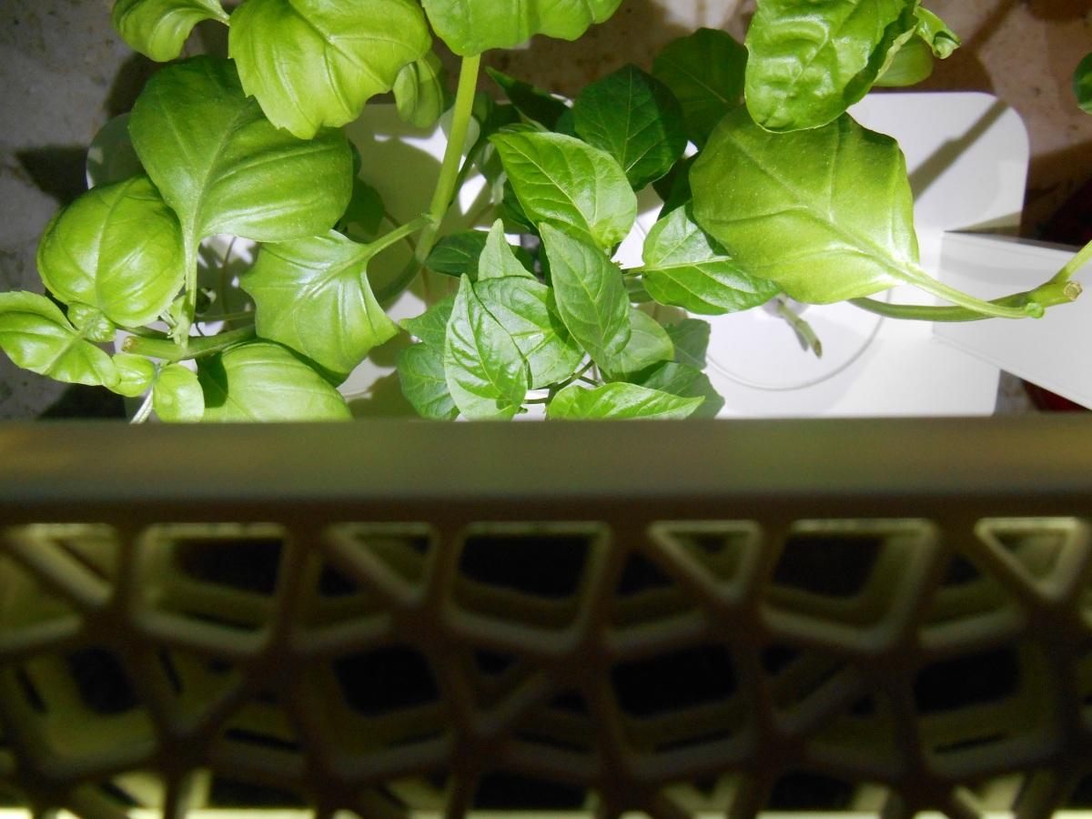 Der Click&Grow Smart Herb Garden für die Küche - ist er das?